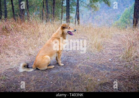 The dog is sitting on forest ground - Stock Image