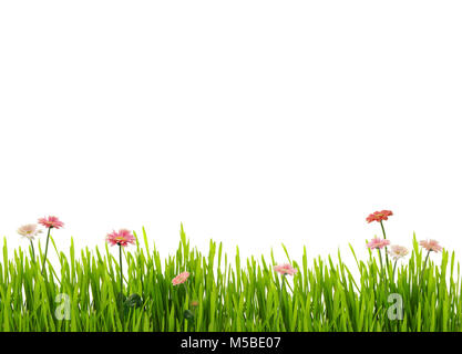 Fresh spring grass and daisies, isolated on white background - Stock Image