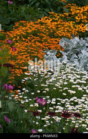 Colourful Summer Garden Border Flowers in The UK - Stock Image