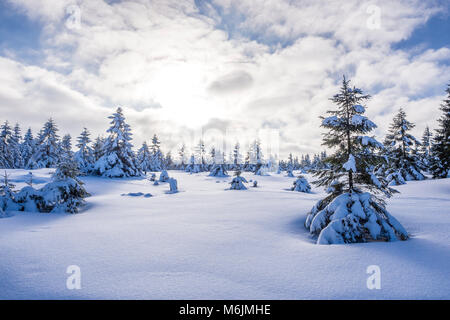 Winter landscape, near Hanskühnenburg,  Harz mountain range, Lower Saxony, Germany - Stock Image