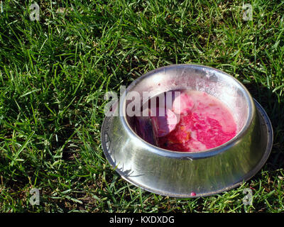 Metal bowl for pets with soup and sausage outdoor on grass - Stock Image