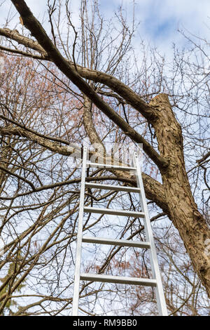 Ladder leading up into a tree without leaves - Stock Image