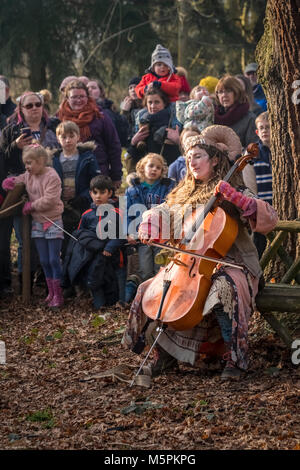 Woman playing cello in a woodland setting as part of outdoor theatre performance by Whispering Wood folk at Hodsock - Stock Image
