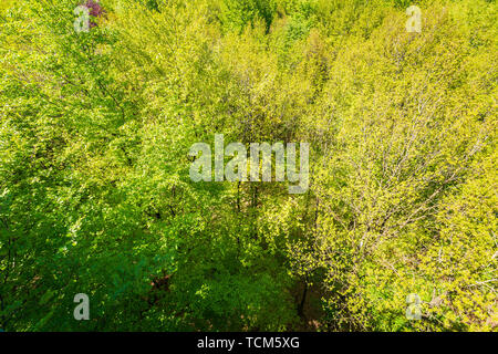 Forest in Summer. Green leaves and sunlight effect through the branches and floor. - Stock Image