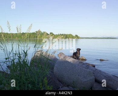 Dog playing on Lake Champlain, North Hero, Vermont in summer. - Stock Image