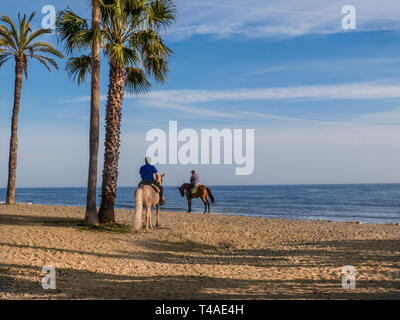 Horses on exercise in the cooler late afternoon air at San Pedro de Alcantara beach Costa del Sol Marbella Spain - Stock Image