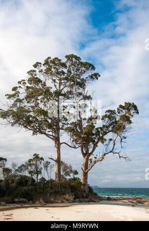 Two Tree Point, largely unchanged since the landing by Tobias Furneaux in 1792, at Adventure Bay, Bruny Island, Tasmania, Australia - Stock Image