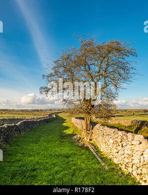 Dry stone walls are a feature of the landscape in the Peak District and some may have mediaeval or even older origins. - Stock Image