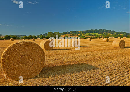 Warwickshire landscape with round straw bales in fields after harvesting. - Stock Image