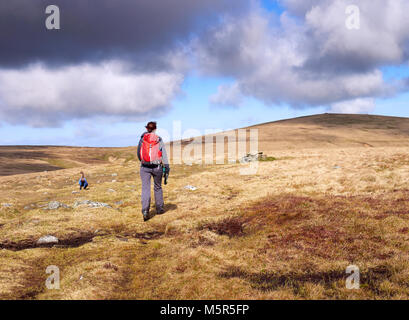 A hiker walking towards Miton Hill and High Pike from the summit of Carrock Fell in the English Lake District, UK. - Stock Image