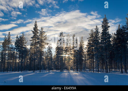 Sunset through frost covered trees - Stock Image