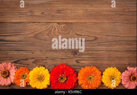 flowers of zinnia on a wooden background. view from above, copy space - Stock Image