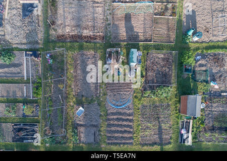aerial view of allotments in spring in  burgess hill west sussex taken by drone - Stock Image