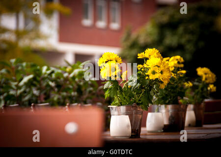 Small sunflowers in metal pails on the wooden table outside the restaurant - Stock Image