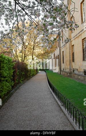 Grove Walk, Between Merton College and Corpus Christi College, Oxford University, Oxfordshire, UK. View from Merton Street. - Stock Image