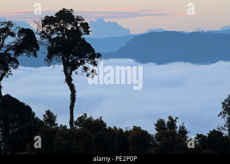 dawn over the park with low cloud in the valley  Kerinci Seblat NP, Sumatra, Indonesia         June 2014 - Stock Image