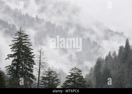 Early morning fog ebbs and flows over the Great Smoky Mountains of Tenessee - Stock Image