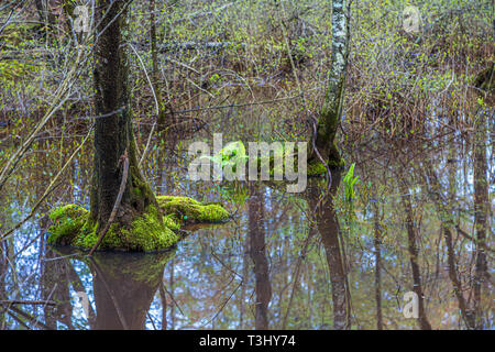 Trees Growing in Flooded Wetlands - Stock Image