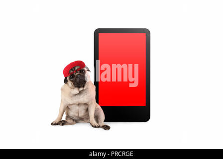 cute pug puppy dog looking smart, sitting next to tablet phone with blank red screen, wearing cap, isolated on white - Stock Image