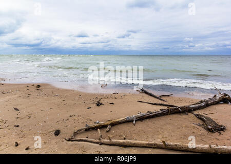 Baltic sea with driftwood on the beach - Stock Image