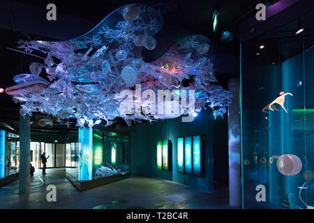 Ozeaneum Public Aquarium, in Stralsund harbour, Baltic Sea, Mecklenburg-Western Pomerania, Germany, Europe - Stock Image