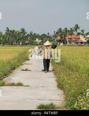 Hoi An local Vietnamese walking along a rice field carrying a rice crop just outside the old town of Hoi An Vietnam. - Stock Image