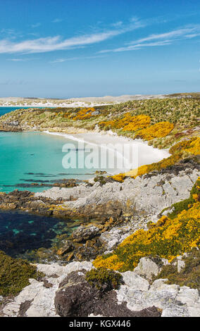 Vertical view of white sandy crescent beach and turquoise water of Gypsy Cove on East Falkland Island (Islas Malvinas). - Stock Image