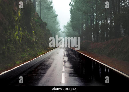 Long way road in the rain at the mountain with pines forest and fog clouds in front and grey clear sky - ground point of view with black asphalt and w - Stock Image