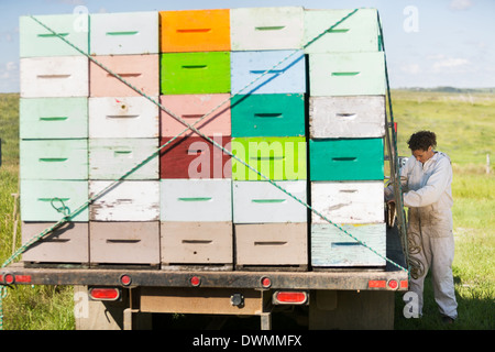 Beekeeper Standing By Truck Full Of Honeycomb Crates - Stock Image