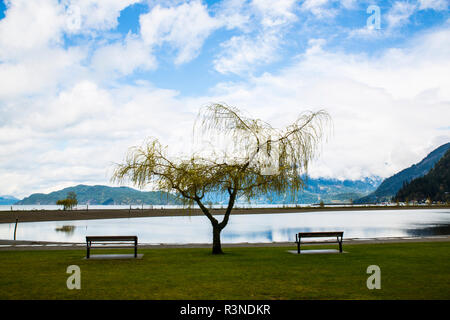 Harrison Hot Springs, British Columbia, Canada, Weeping Willow tree is anchored by park benches looking at the lake and mountain view - Stock Image