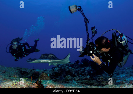 Scuba diver photographing model and Marble ray (Taeniura meyeni) swimming side by side, Vaavu Atoll, Maldives - Stock Image