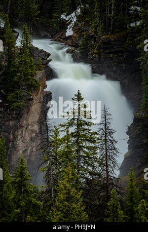 Pine Tree in Front of Beartooth Falls with long exposure - Stock Image