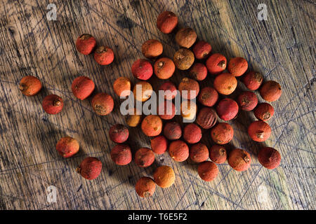 corozo palm tree nuts in Colombia - Stock Image