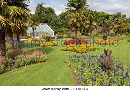 Beautiful lawned flower garden with Palm trees at Calke Abbey, Ticknall, Derbyshire, England, UK - Stock Image