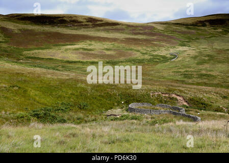 Sheep stells which provide shelter for sheep in bad weather, near Ettrickbridge - Stock Image