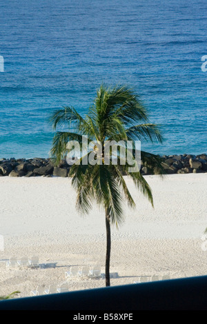 Barbados beach blue break Caribbean chairs deck destination holiday island ocean palm rock sand tree vacation view - Stock Image