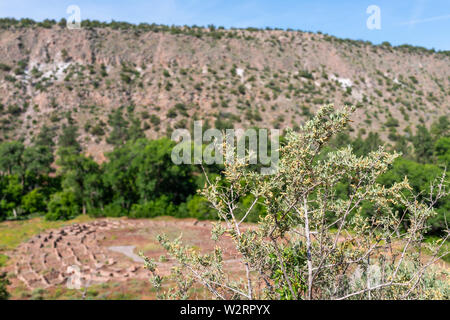 Old pueblo ruins at Main Loop trail with tree in Bandelier National Monument in New Mexico during summer in Los Alamos - Stock Image