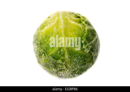 Picture of a single frozen green sprout - Stock Image