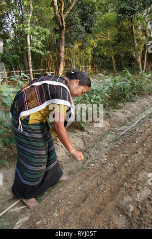 BANGLADESH Woman of the Garo tribal minority planting vegetable seeds, Haluaghat, Mymensingh region photo by Sean Sprague - Stock Image
