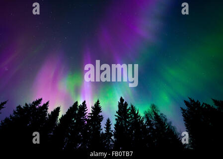 Colorful northern lights in the northern sky above trees - Stock Image