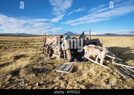 Drying llama fur - Stock Image