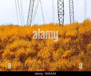 Golden-leafed bushes in the autumn along a power line. - Stock Image