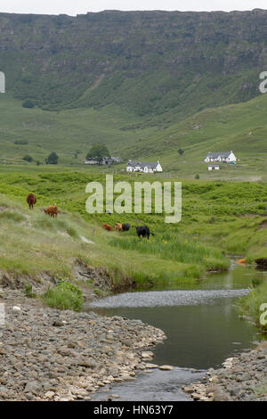 Cattle and cottages near the Bay of Laig on the isle of Eigg in the Small Isles, Scotland. - Stock Image