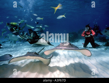 underwater, stingray city, cayman islands, stingrays, diver - Stock Image