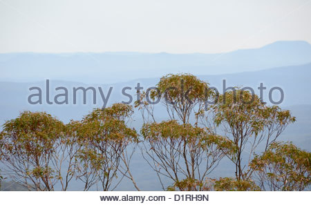 KATOOMBA, Australia - Blue Mountains and gum trees as seen from Echo Point in Katoomba, New South Wales, Australia. - Stock Image