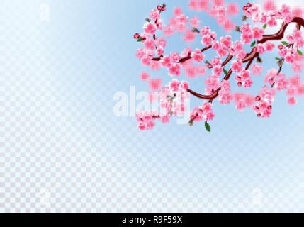 Sakura. Branches with pink flowers, leaves and cherry buds. Defocus effect. On a transparent background. illustration - Stock Image