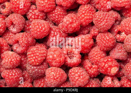 Ripe and fresh red raspberries as a natural full frame background. - Stock Image