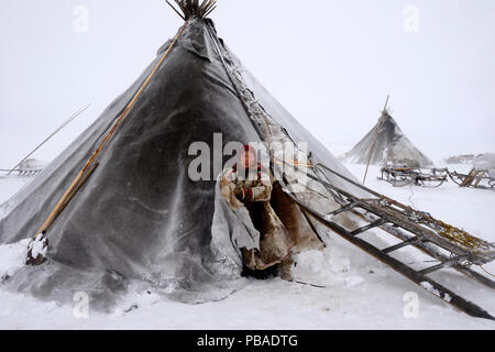 Nenet woman at entrance of tent in blizzard. Yar-Sale district. Yamal, Northwest Siberia, Russia. April  2016. - Stock Image