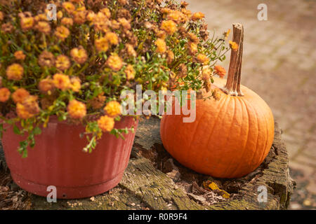 A pumpkin and marigolds, Landis Valley Farm and Museum, Landis, Lancaster County, Pennsylvania, USA - Stock Image