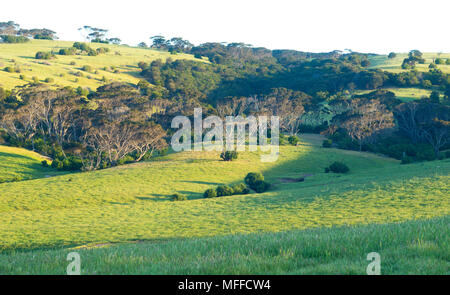 Green hills of Penneshaw, Kangaroo Island bathed in late afternoon sunlight in South Australia, Australia - Stock Image